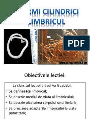 Viermi cilindrici limbricul