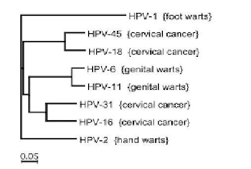 hpv genital traitement)