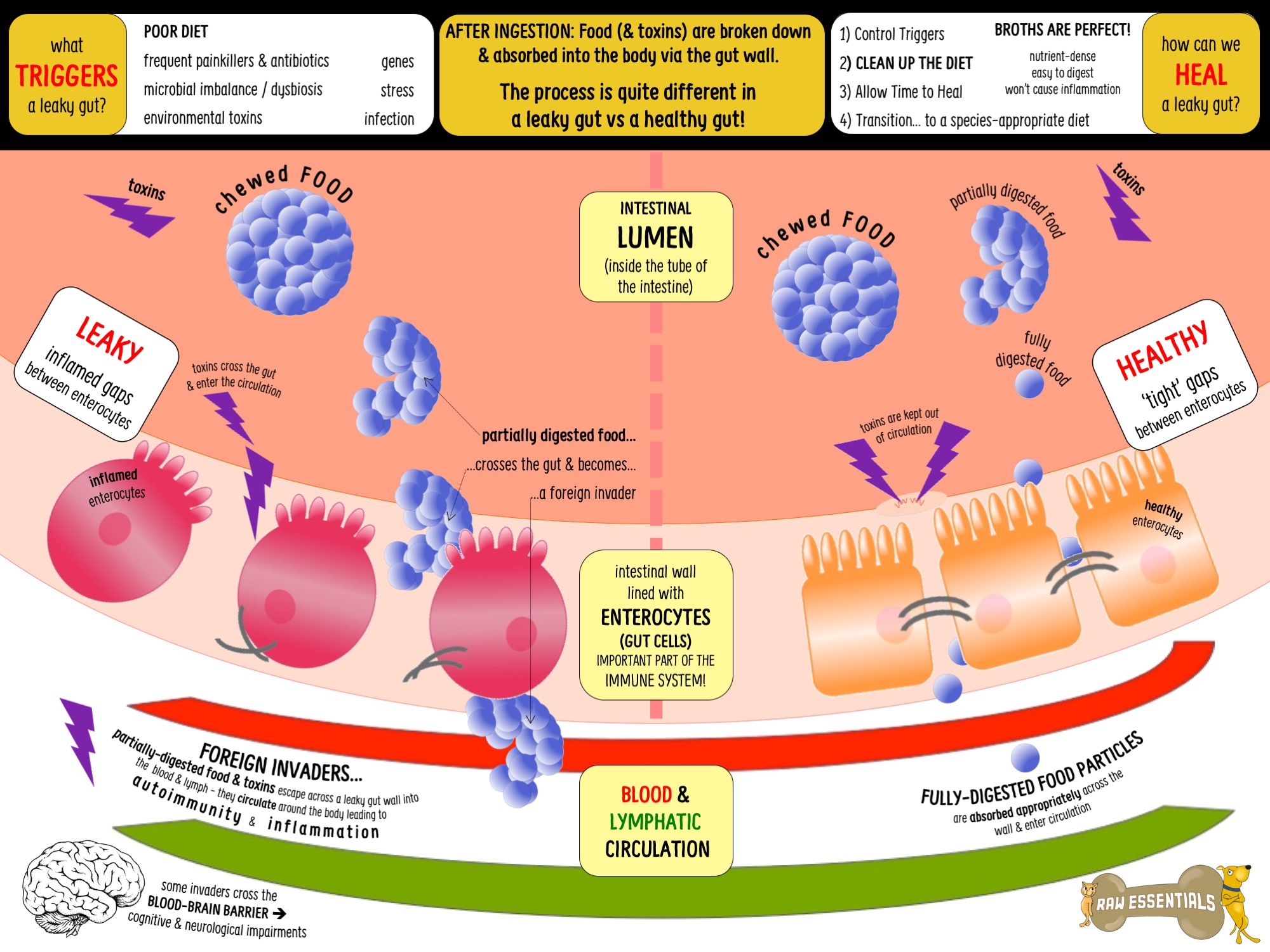 dysbiosis in the gut)