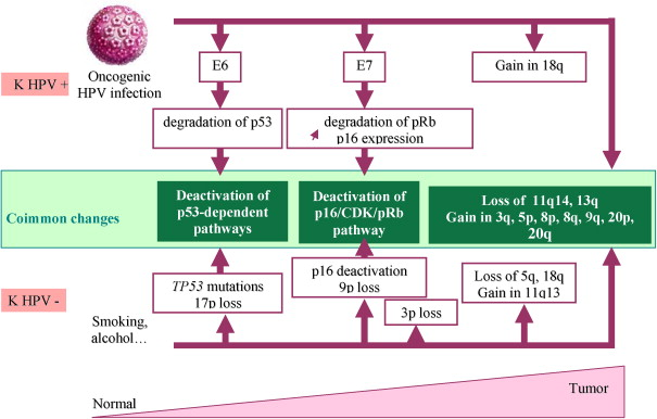 recurrence of hpv head and neck cancer)
