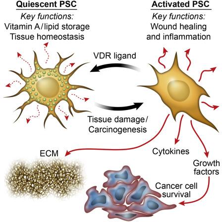 pancreatic cancer vitamin d