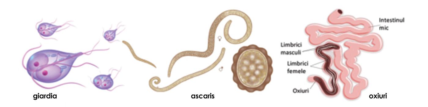 paraziti giardia copii)
