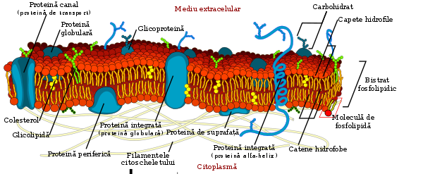 bacterii sediment papilloma entfernen