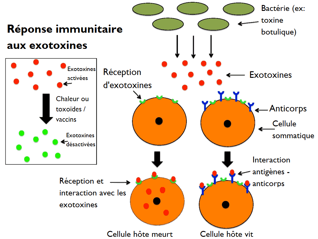 toxine qui sont toxique