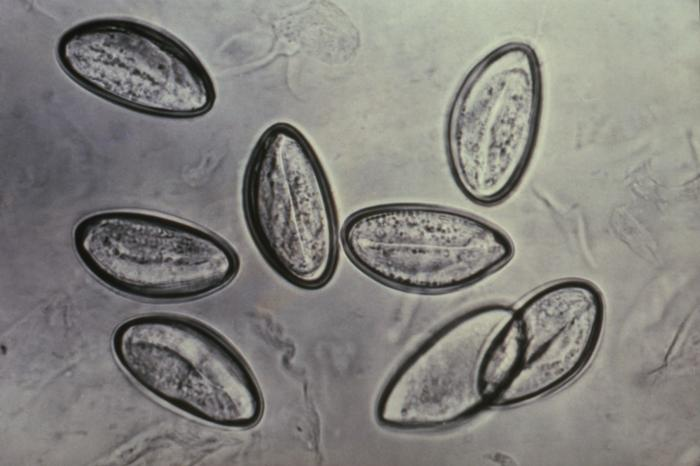 enterobius vermicularis leczenie