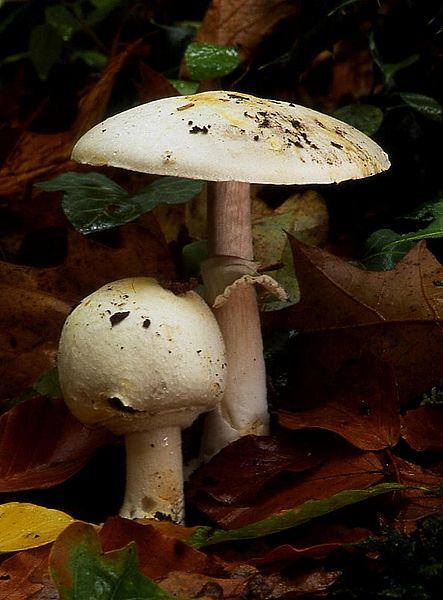 Cele mai gustoase ciuperci care cresc în România. Topul întocmit de un specialist