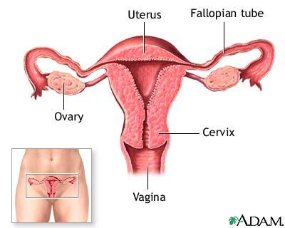 cancerul organelor genitale feminine)
