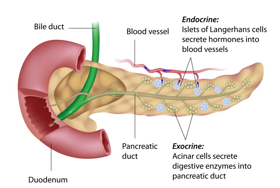 pancreatic cancer endocrine