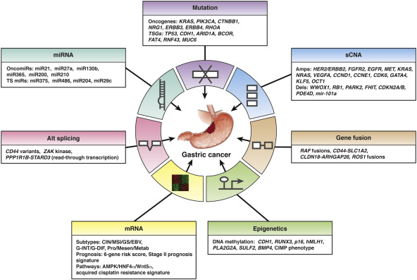 gastric cancer pathophysiology)