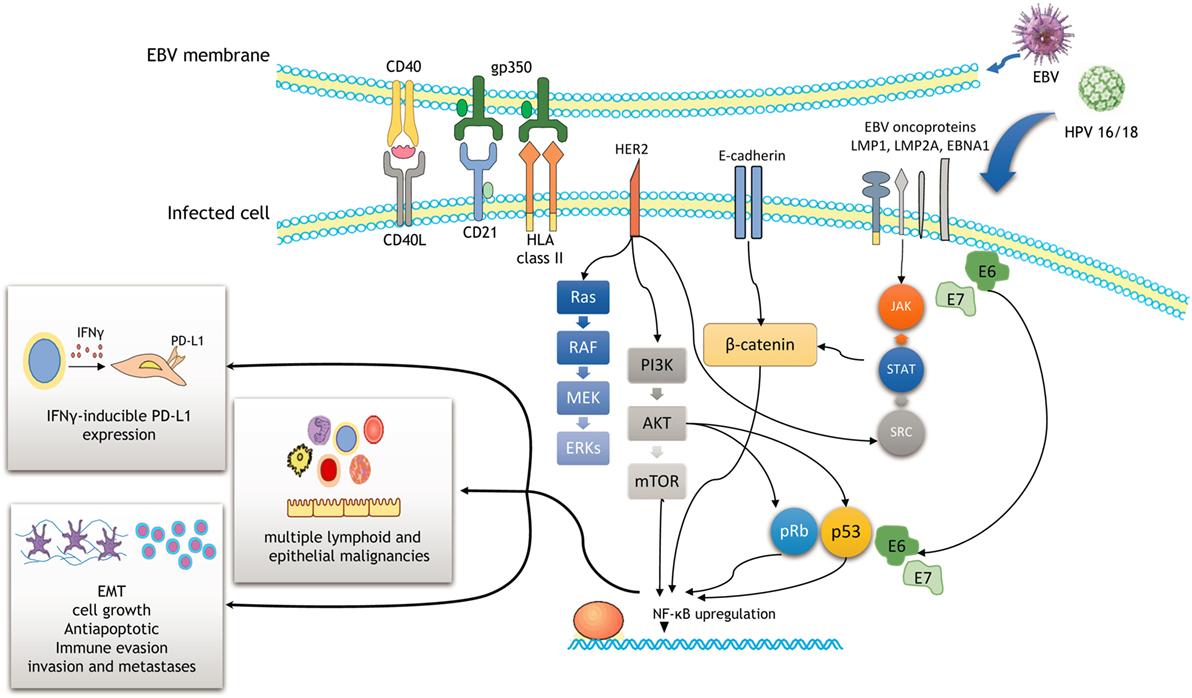 Cum ajuta imunoterapia in anumite forme de cancer