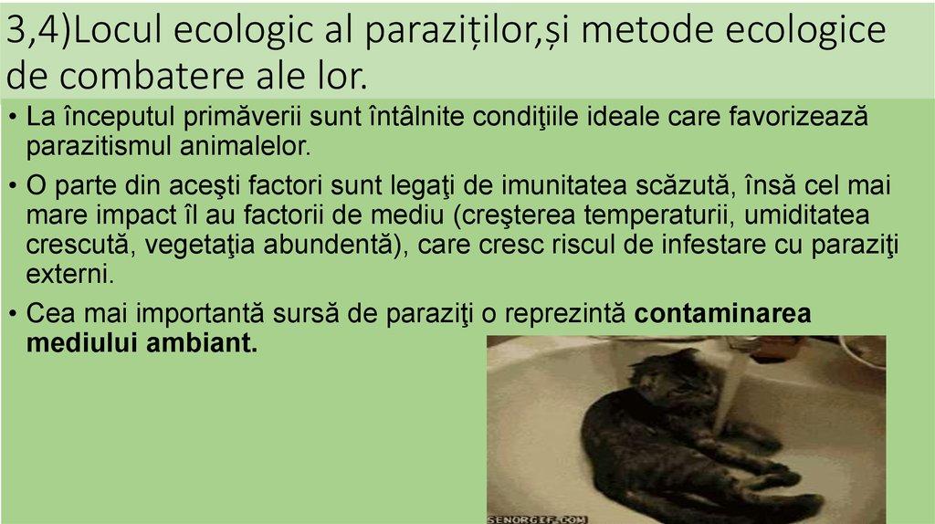 paraziti externi la cai