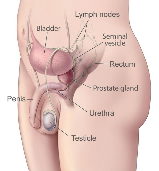 rectal cancer quora simptome in cancerul ovarian