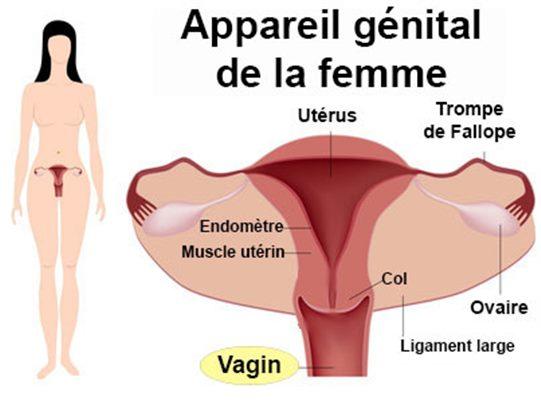 traitement papillomavirus enceinte)