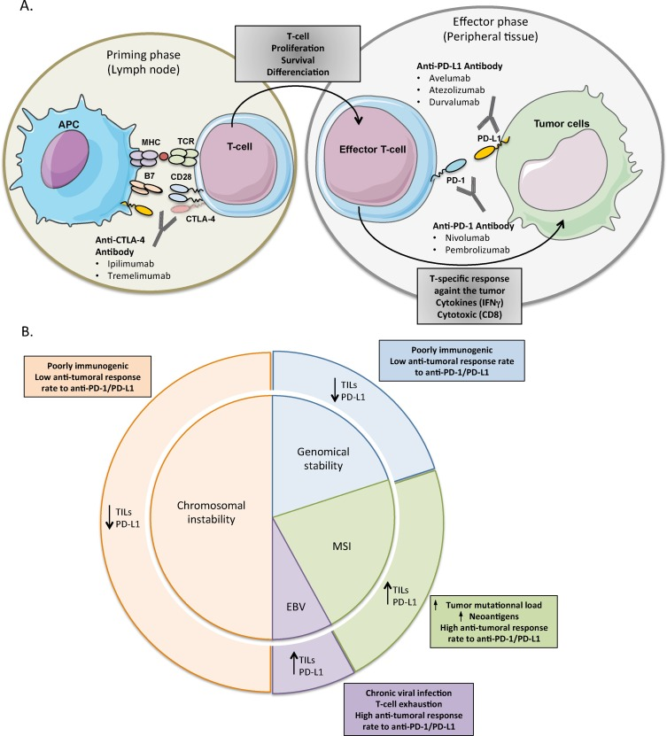 gastric cancer immunotherapy metastatic cancer means
