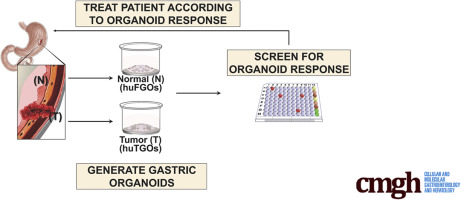 gastric cancer organoids)