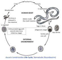 helminth worms in humans)