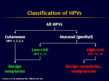 hpv high risk how long does it last)
