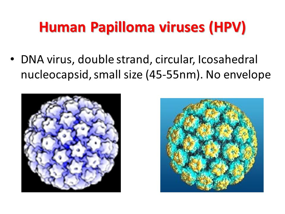 hpv is a dna virus)