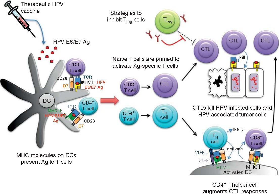 human papillomavirus vaccine interactions