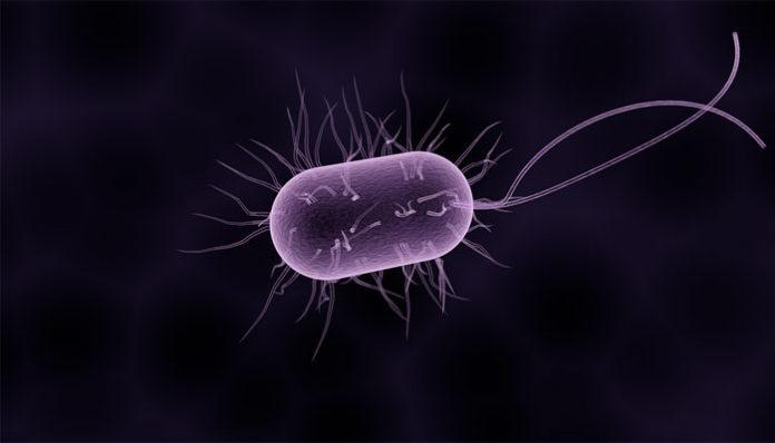 kako prepoznati parazite u organizmu