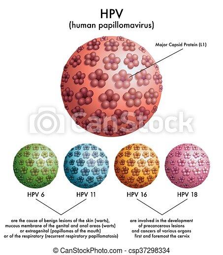 papilloma virus hpv 16