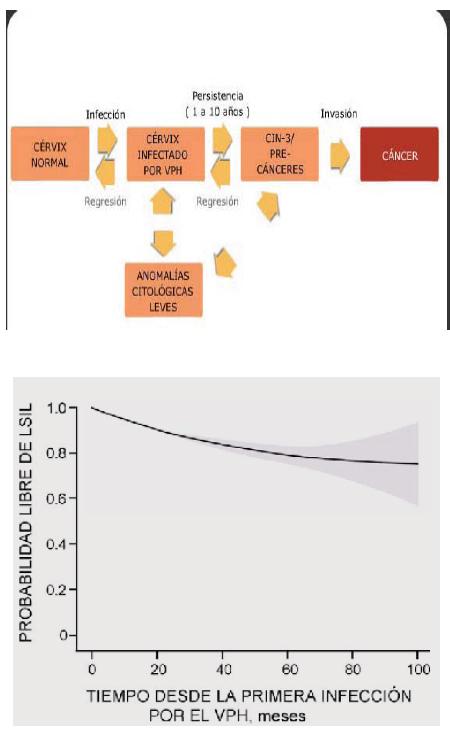 papiloma humano en mujeres tiempo de desarrollo