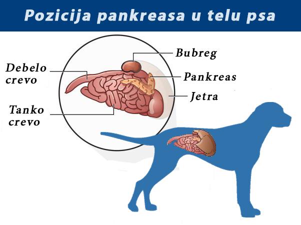 paraziti u uhu kod pasa)
