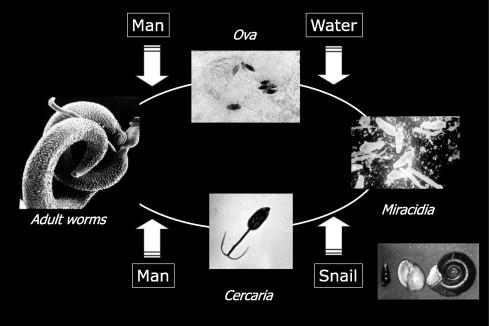 warts papilloma virus oxiuri copii 2 ani