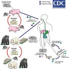 paraziti u telu test