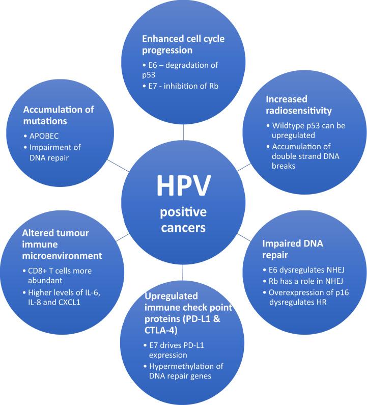 Molecular Virology of Human Pathogenic Viruses