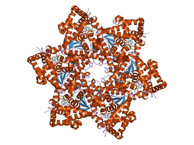 papilomavirus humano hpv genital)