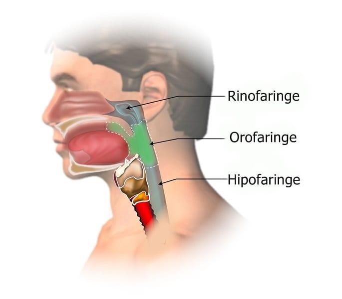cancer laringo-faringian)