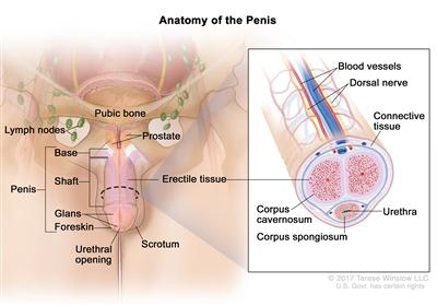 HPV genotipare-uretră | Synevo