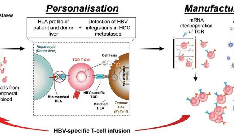 hepatocellular cancer patients)