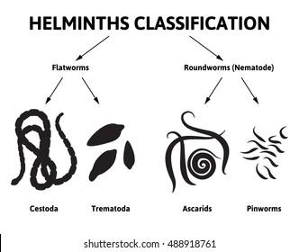 helminth nematode worms)