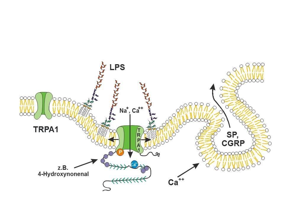 Toxine bacteriene - Pagini [1] - Lume cunoștințe enciclopedice