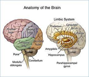 cancer cerebral symptoms)