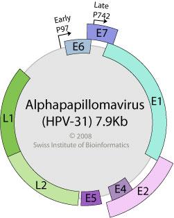 alpha papillomaviruses)