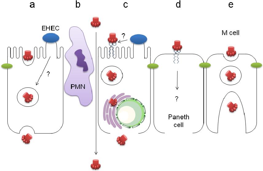 cara menyembuhkan papiloma hpv genital warts and cancer