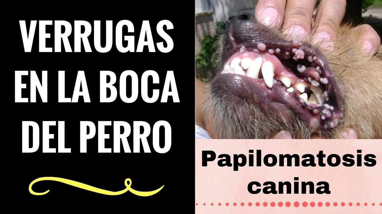 papiloma en la boca perros