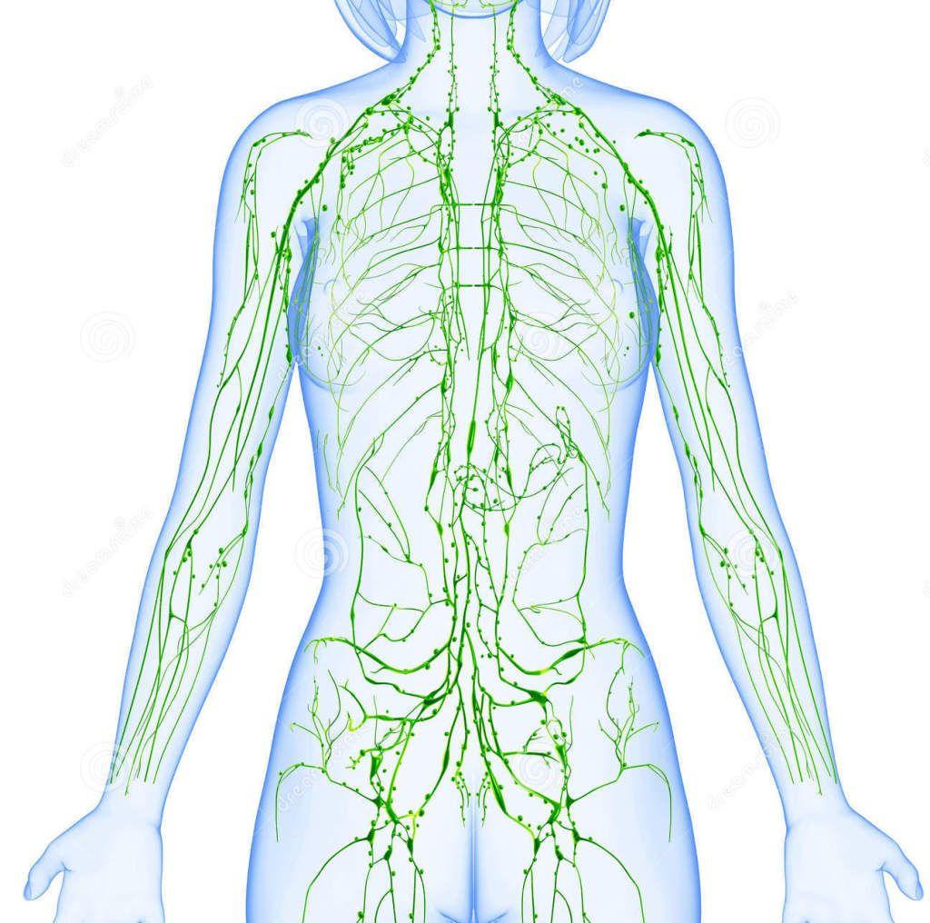 metode de detoxifiere a sistemului limfatic