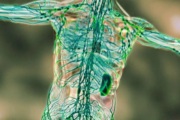 Tratamente naturiste. 6 metode eficiente de curățare a sistemului limfatic - Antena Satelor