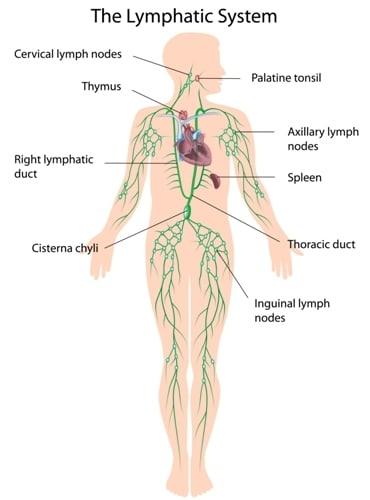 gastric cancer metastasis sites