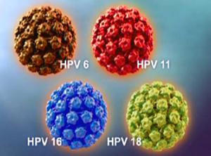 hpv virus tip 16