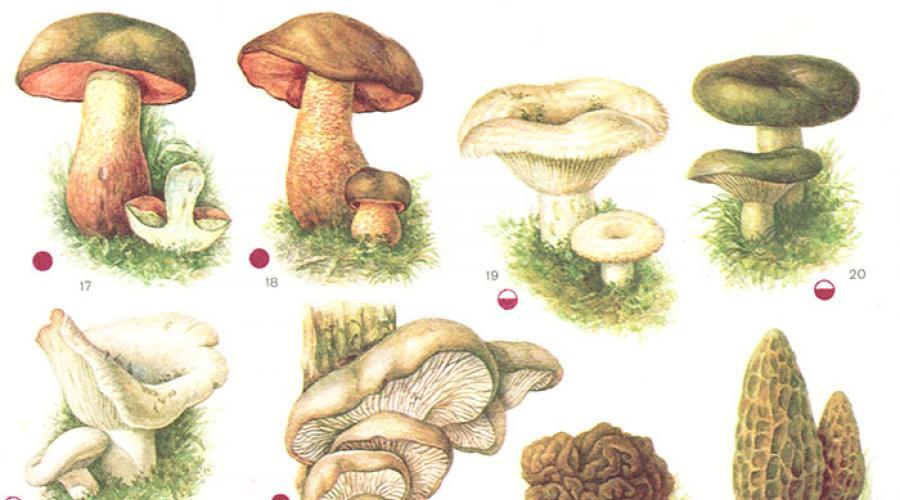 Valoarea nutritiva a ciupercilor. Sunt foarte hranitoare si nu contin multe calorii