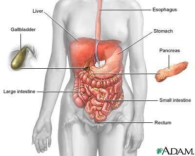 cancerul intestinului subtire paraziti enterobius vermicularis