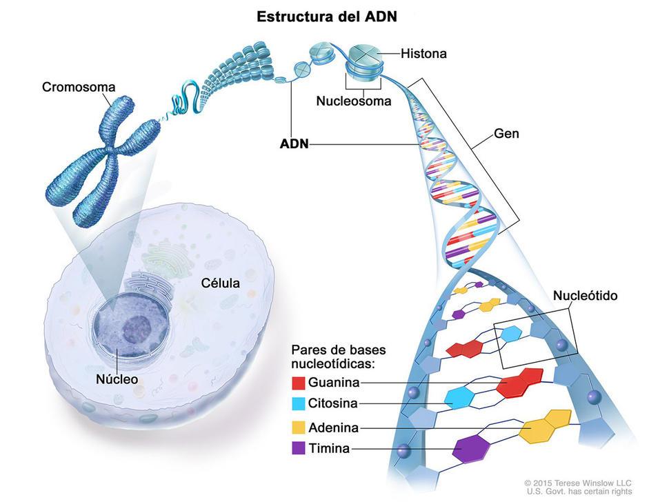 cancerul se transmite genetic