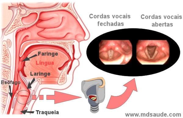 cancer de faringe sinais e sintomas)