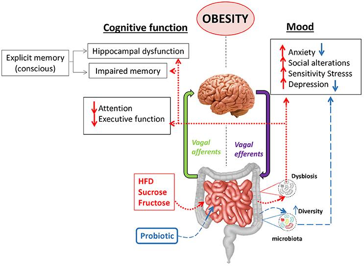 dysbiosis obesity