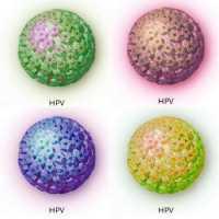 hpv genital no homem neuroendocrine cancer keytruda
